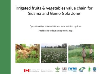 Irrigated fruits & vegetables value chain for  Sidama  and  Gamo Gofa  Zone