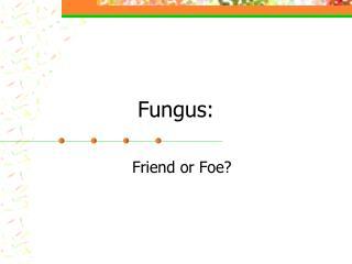 Fungus: