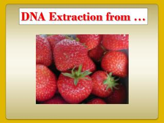 DNA Extraction from …