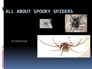 All about spooky spiders