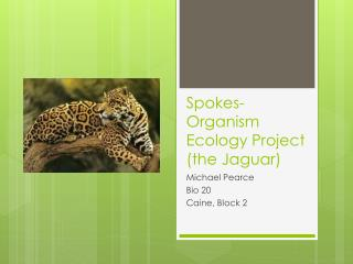 Spokes-Organism Ecology  Project (the Jaguar)