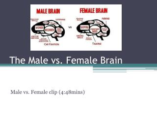 The Male vs. Female Brain