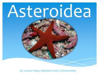 Asteroidea