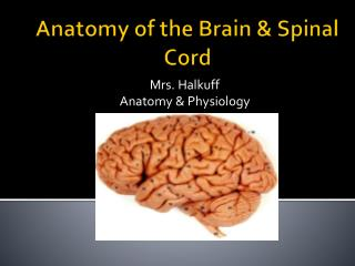 Anatomy of the Brain & Spinal Cord