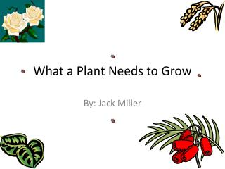 What a Plant Needs to Grow