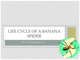 Life Cycle Of A Banana Spider