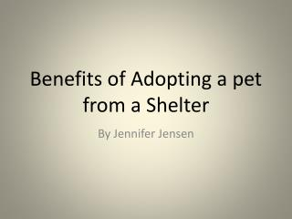 Benefits of Adopting a pet from a Shelter