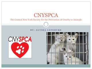 CNYSPCA  The Central New York Society for the Prevention of Cruelty to Animals