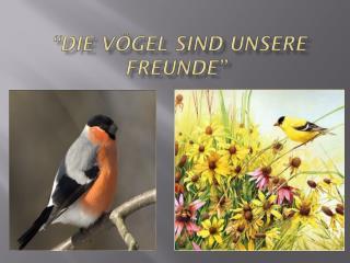 """""""Die vögel sind  unsere freunde"""""""