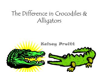 The Difference in Crocodiles & Alligators