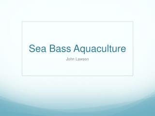 Sea Bass Aquaculture