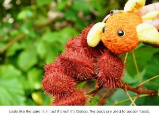 Looks like the sorrel fruit, but it's not! It's  Ookoo . The pods are used to season foods.