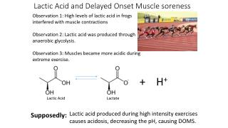 Lactic Acid and Delayed Onset Muscle soreness