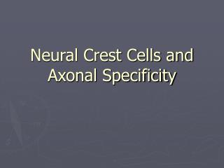 Neural Crest Cells and Axonal Specificity
