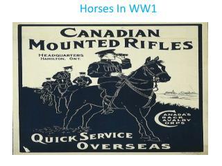 Horses In WW1