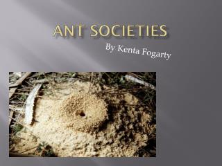 Ant societies