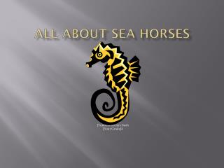 All About  Sea Horses