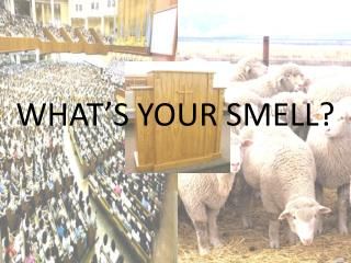 WHAT'S YOUR SMELL?