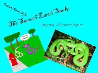 The Smooth Earth Snake