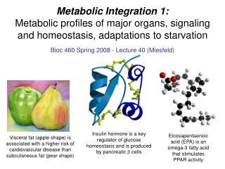 Metabolic Integration 1: Metabolic profiles of major organs, signaling and homeostasis, adaptations to starvation