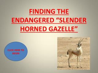 FINDING THE ENDANGERED �SLENDER HORNED GAZELLE�