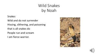 Wild Snakes by  N oah