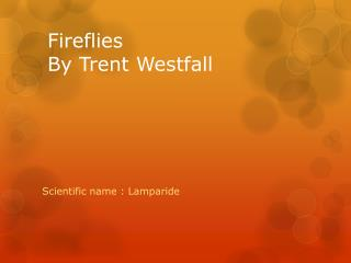Fireflies By Trent Westfall