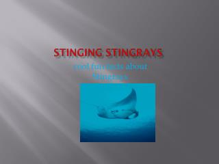 Stinging Stingrays
