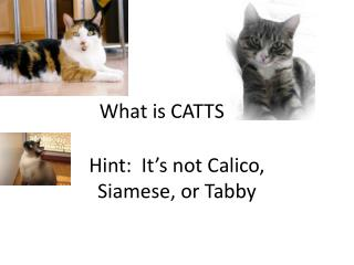 What is CATTS???