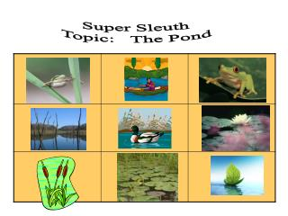 Super Sleuth  Topic :    The Pond