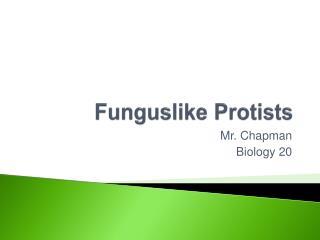 Funguslike Protists