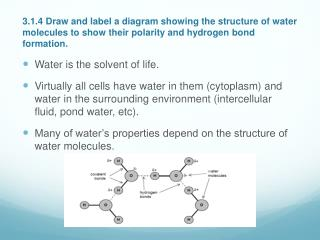 Water is the solvent of life.