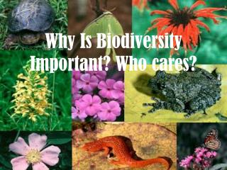 Why Is Biodiversity Important? Who cares?