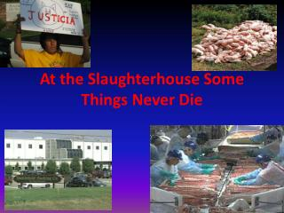 At the Slaughterhouse Some Things Never Die
