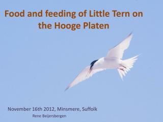 Food  and feeding  of Little  Tern  on the Hooge Platen