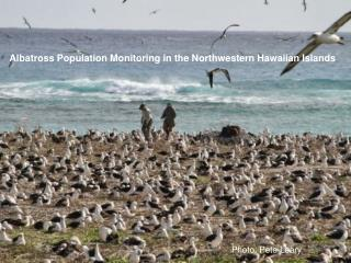 Albatross Population Monitoring in the Northwestern Hawaiian Islands