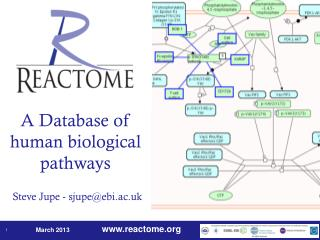 A Database of human biological pathways Steve Jupe - sjupe@ebi.ac.uk