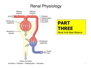 Urinary   Renal Deviations