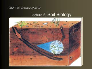 Lecture 6, Soil Biology