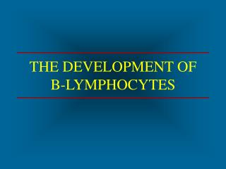 THE DEVELOPMENT OF  B-LYMPHOCYTES