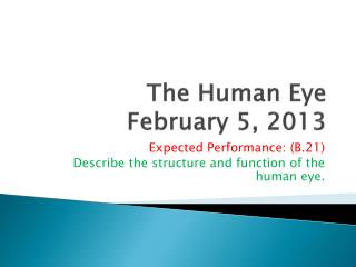 The Human Eye February 5, 2013