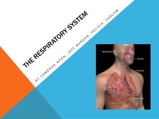 The Respiratory  S ystem