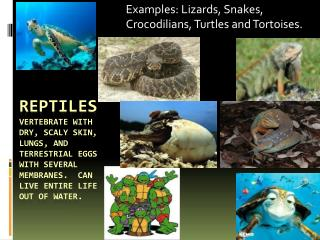 Examples: Lizards, Snakes, Crocodilians, Turtles and Tortoises.