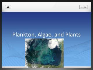Plankton, Algae, and Plants