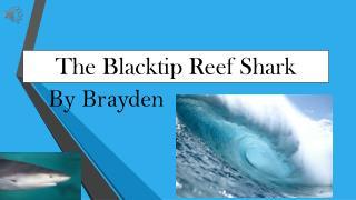 The  Blacktip  Reef  S hark