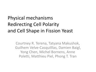 Physical mechanisms Redirecting Cell Polarity and Cell Shape in Fission Yeast
