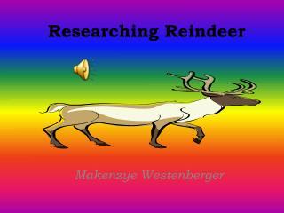 Researching Reindeer