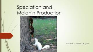 Speciation and  Melanin Production