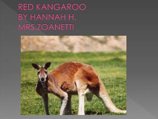 RED KANGAROO BY HANNAH  H. MRS.ZOANETTI