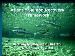 Atlantic Salmon Recovery Framework